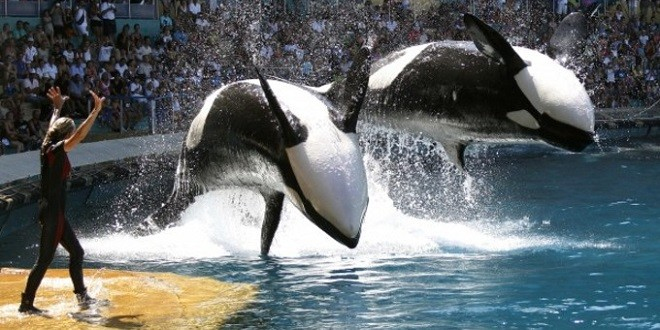 Blackfish (2013) and How SeaWorld Doth Protest Too Much